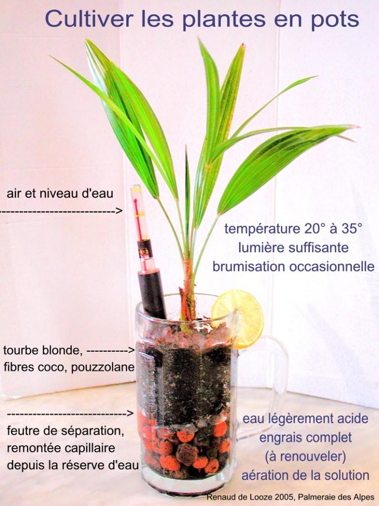 plantes_pots